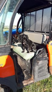 Farm dispersal sale doggie helper