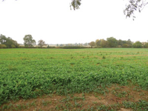 Kislingbury land auction